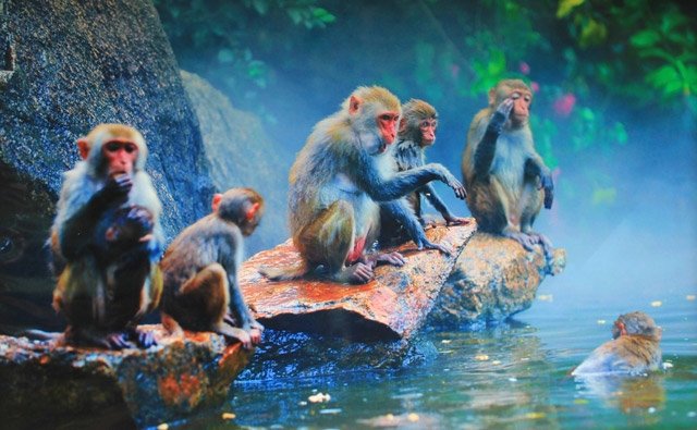 Half-day Sanya Monkey Island Tour