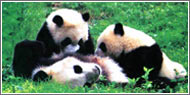 Featured Chengdu Tours
