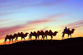 Silk Road Tours