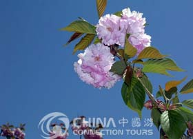 Dalian botanical garden, Dalian Attractions, Dalian Travel Guide