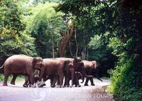 Wild Elephant Valley - Jinghong Travel Guide
