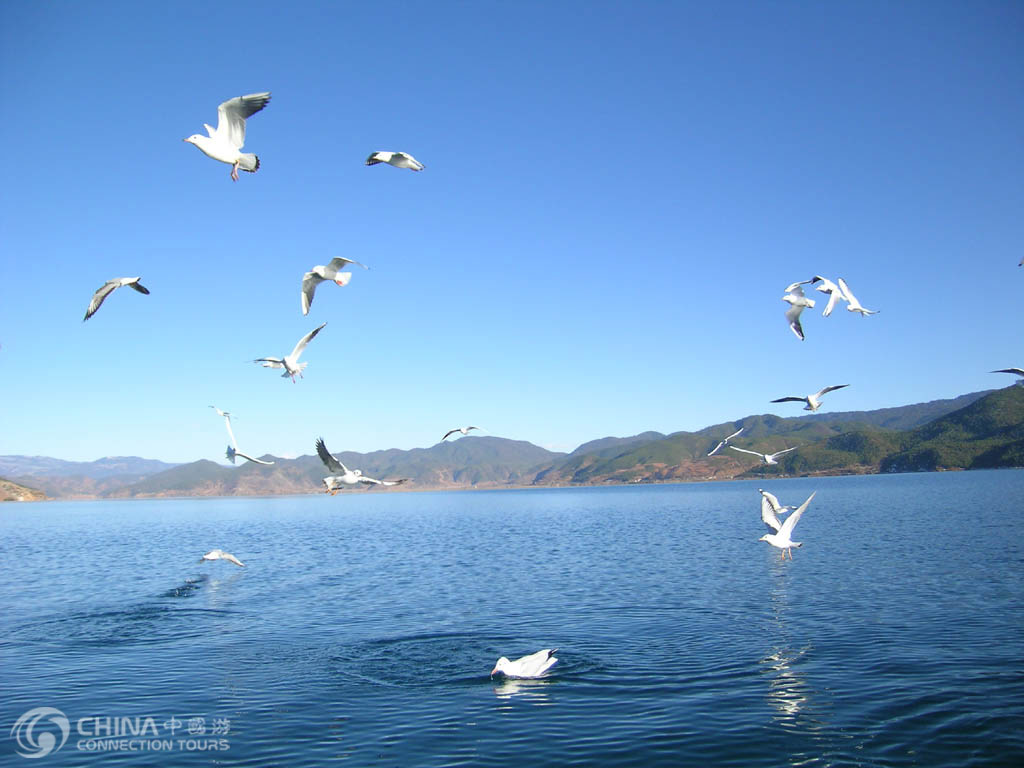 Xining Qinghai Lake, Xining Attractions, Xining Travel Guide